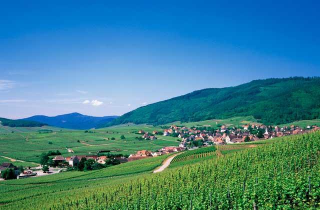 斜面の上こそブドウ栽培の聖地!?ワイン造りとブドウ栽培の関係とは